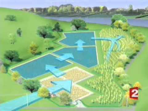 Planta de tratamiento de agua por fitorremediaci n youtube - Tratamiento de agua ...