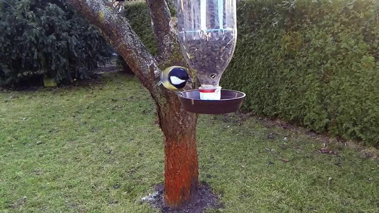 vogelfutterflasche - youtube