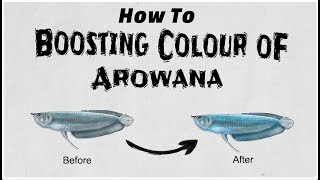 How To Boosting Colour Of Arowana