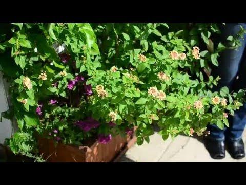 Herb Garden Plans U0026 Designs : Common Herbal Questions