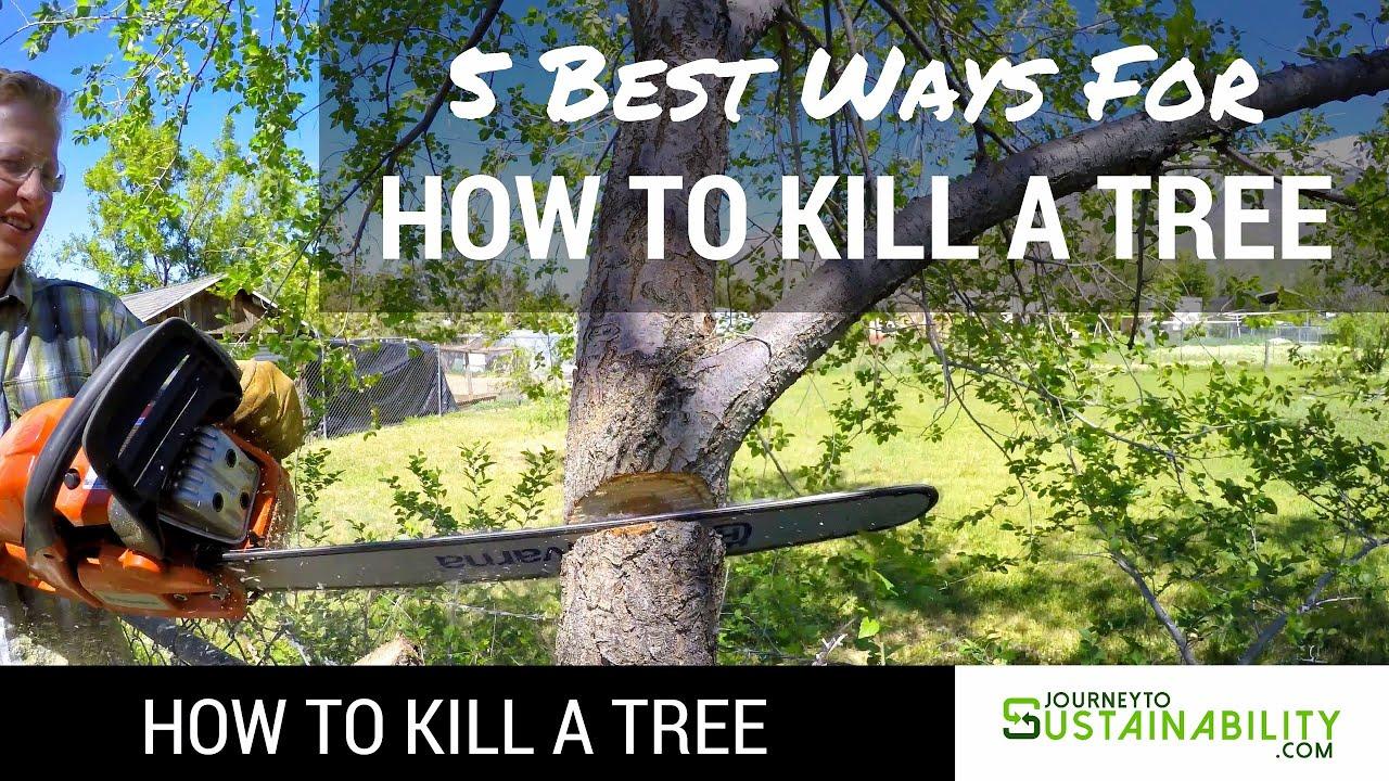 5 Best Ways For How To Kill A Tree  How To Kill A Tree