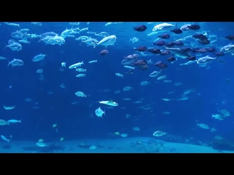 6 Hours Peaceful & Relaxing Aquarium - Ocean Voyager 3  (Close-up view) Screensaver for DEEP SLEEP