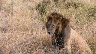 2013年7月、ケニアのムービーです。HDでご覧ください。(SONY α55,アドビ...