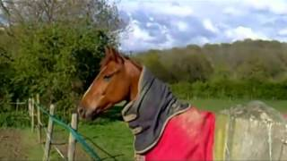 Neighing horse