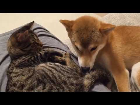 FUNNY DOG and CAT Videos Cats vs Dogs Compilation #4