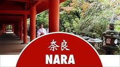 Découvrez la ville de Nara - Japon