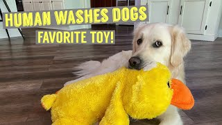 Human Washes Dogs Favorite Toy