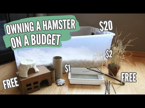 owning-a-hamster-on-a-budget