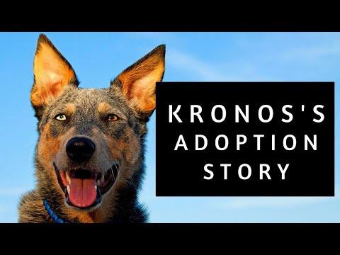 Kronos's Adoption Story Video Re-enactment