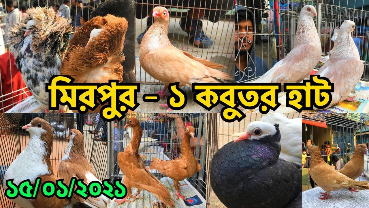 বর্তমানে চড়া কবুতর বাজার | মিরপুর - ১ কবুতর হাট | Best Pigeon Market in Dhaka, Bangladesh (V -214)