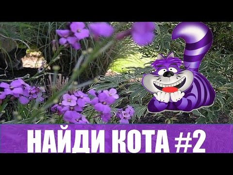 Найди кота, суперудобные ответы на игру в Одноклассниках