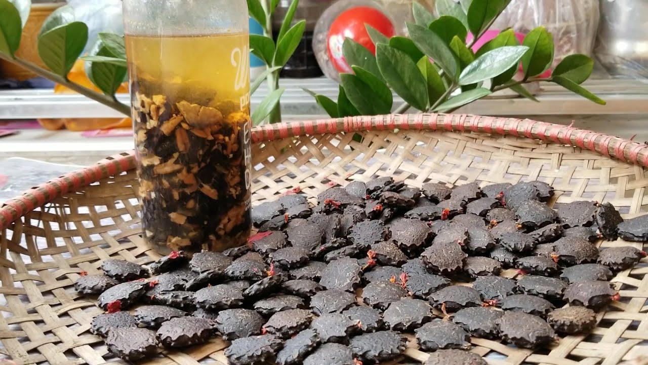 Cách làm NGÂM RƯỢU HẠT GẤC chữa trị đau khớp, quai bị, viêm xoang… / How to make Gac seed alcohol