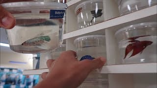 BETTA FISH SHOPPING! *EXOTIC FISH FEEDING*