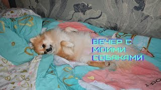 ВЕЧЕР МОИХ СОБАК/EVENING routine with pomeranian