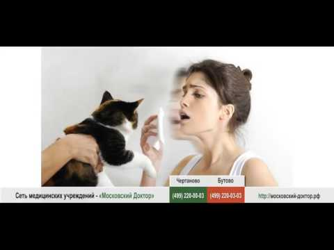 Аллергия на кошек: правила совместной жизни
