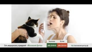 Аллергия на шерсть кошек и собак у детей и взрослых