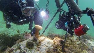 Lofoten Diving: Robert Hansen, underwater film and photo