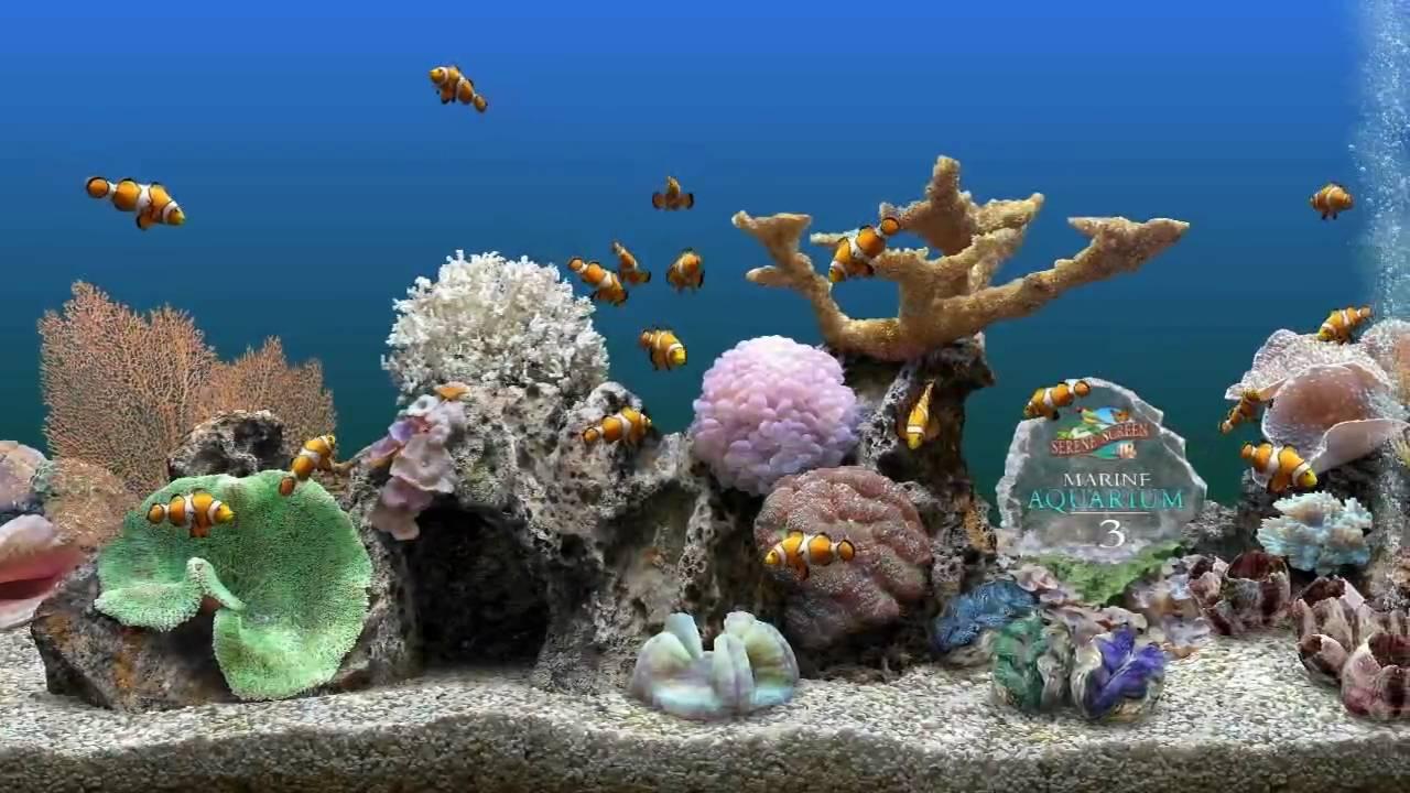 Desktop Aquarium 3d Live Wallpaper Aquarium Screen Savers Best Avi Youtube