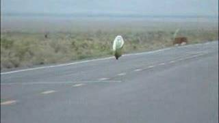 High Speed Streamlined Bicycle Crash!