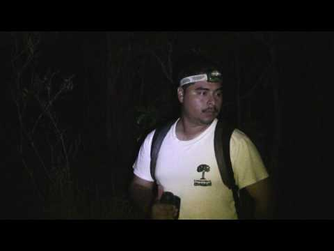 Quest for the Nest - The Belize Stygian Owl Project