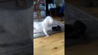 Big dog Vs little dog