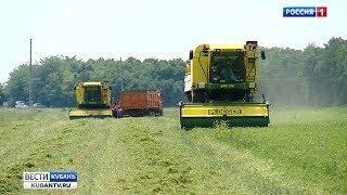 На Кубани убирают зеленый горошек