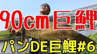 90cmの巨大鯉アルティマ70Mのパワーで仕留めましたよ!パンDE巨鯉#6 thumbnail