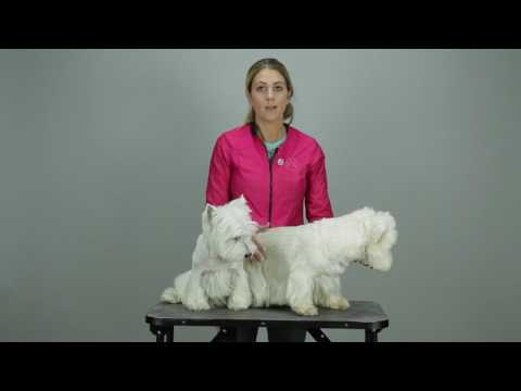 Two Westie Trims - Groomers Gallery Preview