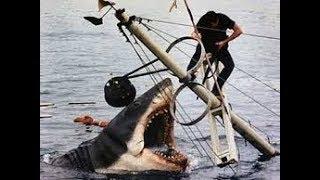 Shark Food! Shark Food!!!
