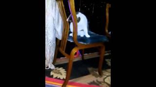 Интересные игры дикой кошки