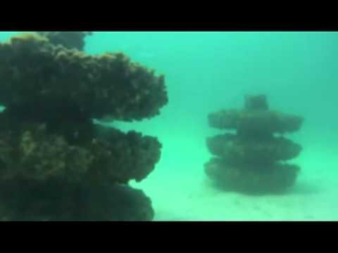 Snorkeling Reef-EcoSystem Reefs