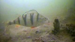 Зимняя рыбалка.Вид из подо льда.(Еще больше видео смотри на http://smotrimvideo.com/?a_aid=676&a_bid=3 Все для развлечения http://rasslabuha.ucoz.com/, 2009-08-05T16:12:36.000Z)