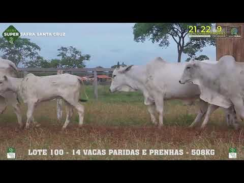 LOTE COMERCIAL 100