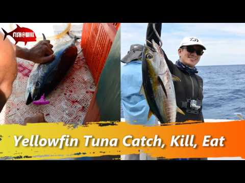 Burma Banks Offshore - Polaris One - Yellowfin Sashimi