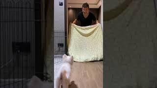 what the fluff, dog magic,  dog magic show, funny dog, Japanese spilz