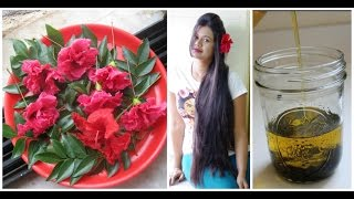 Homemmade Hibiscus & Curry Leaf Herbal Oil for Long & Thick Hair|Sushmita's Diaries