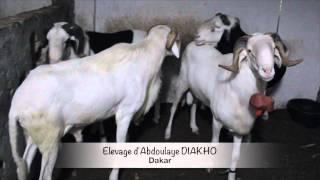 ELEVAGE ABDOULAYE DIAKHO, Soninke vivant à Dakar