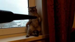 Кошка и пылесос.Приколы с котами. Смешное видео с кошками.