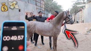 اللي يركب هذا الحصان بدون سرج ويركض وما يطيح له 5,000 الاف ريال !!