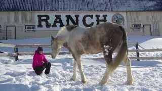 My horse Roxy / Mon cheval Roxy