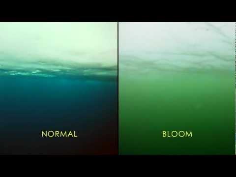 NASA Discovers Massive Phytoplankton Bloom Under Arctic Sea Ice