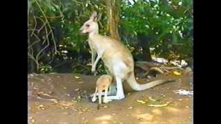 Australie - Parc animalier - Français