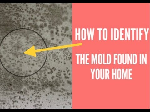 How To Identify Mold Found In Your Home Tape Lift Sample
