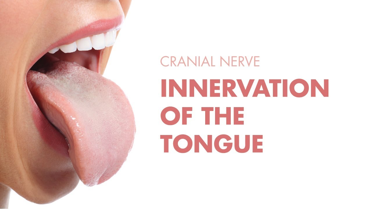 Innervation of the Tongue - Cranial Nerves - MEDZCOOL