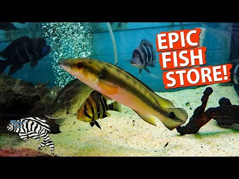 HUGE FISH STORE TOUR!! Gerber's Tropical Fish 2018