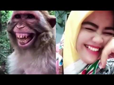 ?Funny Dog Videos 2020? ? It's time to LAUGH with Dog's life