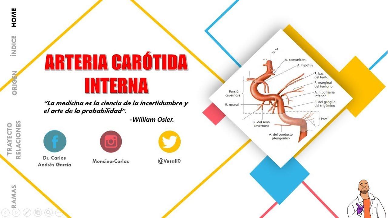 Anatomía - Arteria Carótida Interna (Origen, Trayecto, Porciones ...