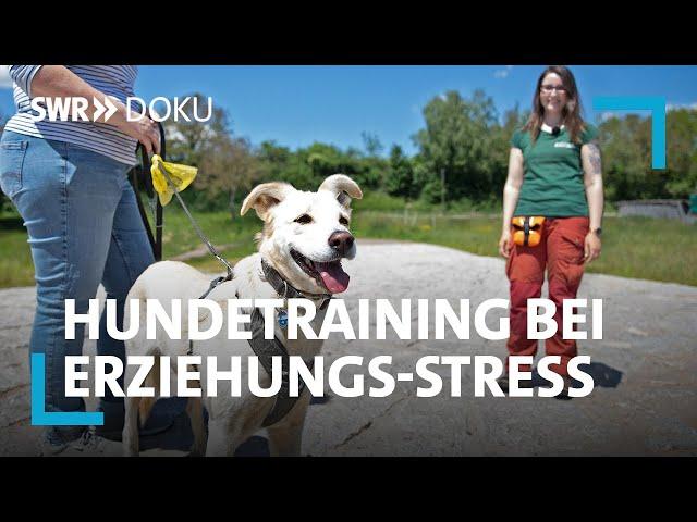 Mein neuer Hund - Trainerin Franzi hilft bei der Erziehung   SWR Doku