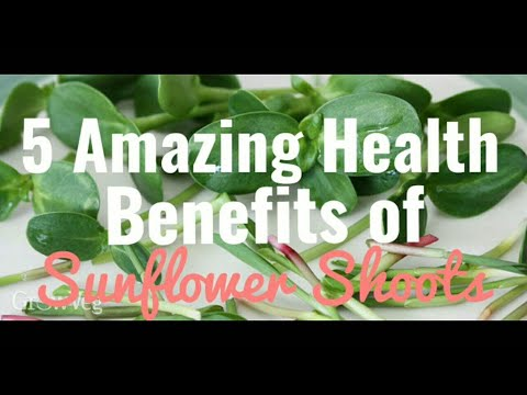 The Amazing Health Benefits of Sunflower Microgreens