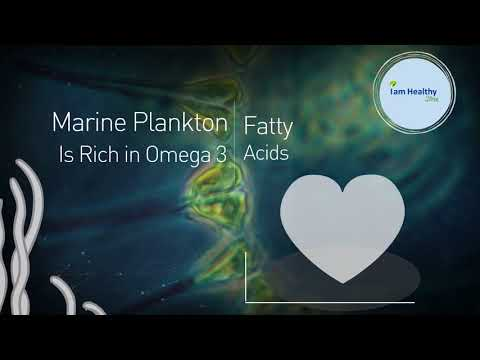 Marine Phytoplankton Powder | (210) 960-9333 | Marine Phytoplankton